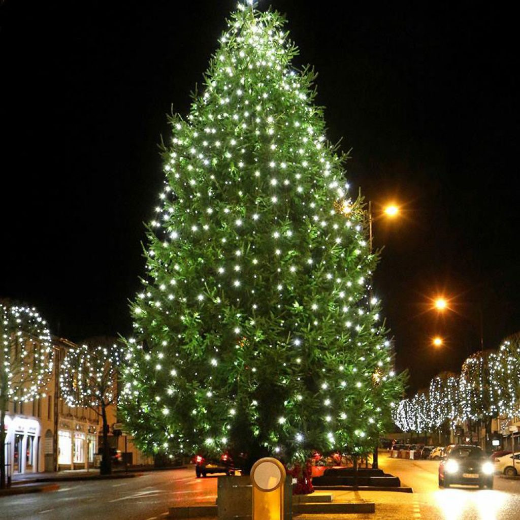 Images Of Christmas Trees.Christmas Tree Retail And Town Centre Municipal Trees
